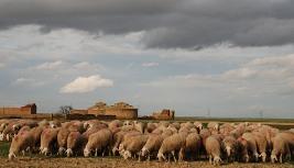 rebano-de-ovejas