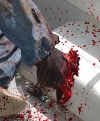 heridos-en-el-muro-del-sahara