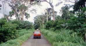 bosque-de-guinea