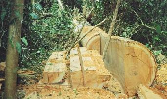madera-tropical