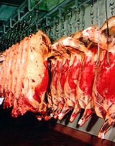 matadero-de-ganado