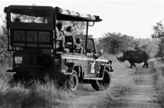 cazadores-de-rinocerentes