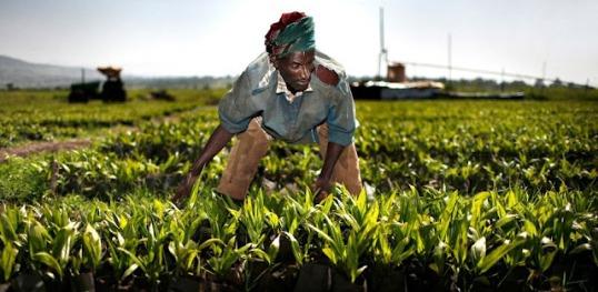 acaparamiento-de-tierras-en-africa