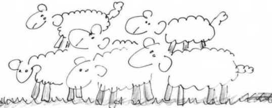 rebano-ovejas2