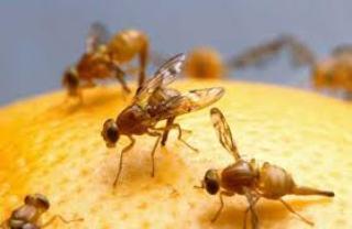 panal-de-rica-miel