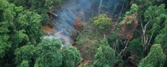 tala-ilegal-de-bosques-en-liberia