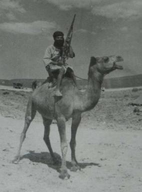 saharaui-a-camello