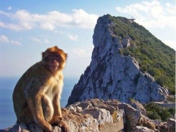 Gibraltar y sus monos