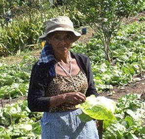 Trabajadora hondureña recogiendo la semilla del café.